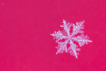 Single snow flake on red background