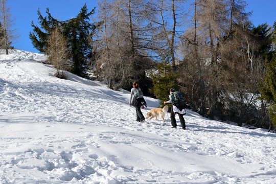 mountaineers climbing the mountain with the dog
