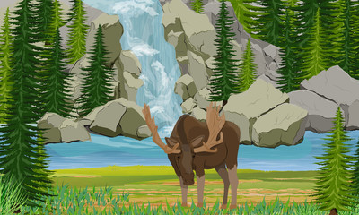 Elk stands on the shore of a mountain lake. Waterfall, rocks and spruce trees. Wild animals of Europe, Scananavia, USA and Canada. Realistic Vector Landscape