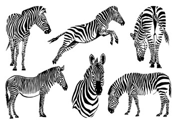 Graphical set of zebras isolated on white background,vector sketch for tattoo and design
