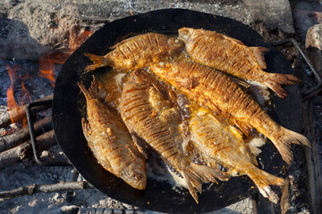 Several whole fish frying in a pan on open fire. Fried fish for picnik lunch.