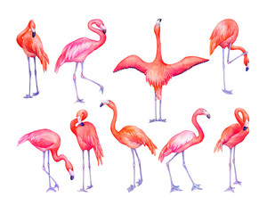 Set of tropical pink flamingos bird (flame-colored) in different poses. Hand drawn watercolor painting illustration isolated on white background.