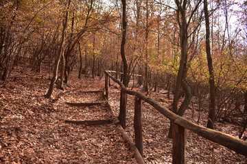 path in the autumn forest near Tamási, Hungary