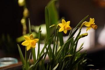 Foto auf Acrylglas Blumenhändler Gele paas bloemen