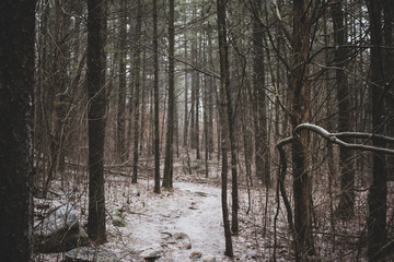 A snow covered trail leading through a forest