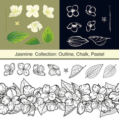 Set of isolated jasmine flowers and leaves hand-drawn in different styles.. Vector collection of outline, chalk, pastel jasmine elements. Spring tree blossom