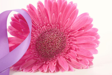 International Women's Day Pink Gerbera with symbolic purple ribbon on white wood table, with applied vintage wash filter.