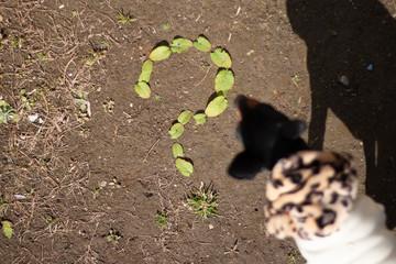 葉っぱで作ったはてなマーク。疑問、Q&Aアイキャッチイメージ画像