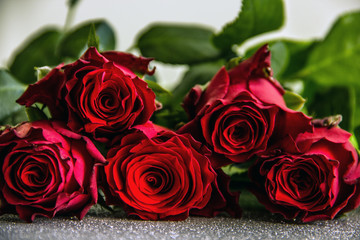 Red roses on silver background close up, greeting card, background with beautiful flowers