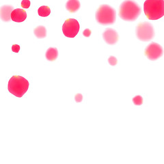 Pink rose petals falling vector valentine background.