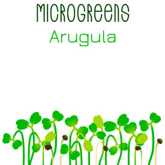 Microgreens Arugula. Seed packaging design. Sprouting seeds of a plant