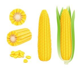 Fototapeta Corn cob realistic. Yellow canned fresh corn vegetables harvest sweetcorn vector template. Illustration of corn vegetable, realistic nutrition obraz