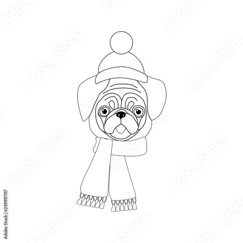 Pug with hat and scarf illustration
