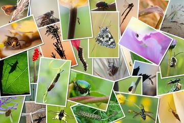 pêle-mêle de photos d'insectes