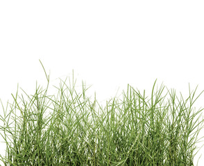 Spring fresh green grass