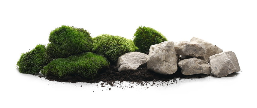Green moss with dirt, soil and decorative stone, rock isolated on white background