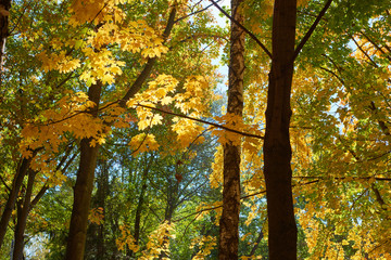 treein autumn forest