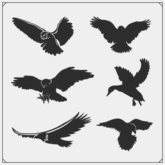 Set of bird silhouettes. Raven, eagle, owl, falcon, hawk and duck. Print design for t-shirts.