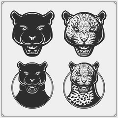 The emblems with panther and leopard for a sport team. Design for t-shirt.