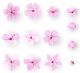 Realistic sakura or cherry blossom; Japanese Spring Flower Sakura; Pink Cherry Flower.