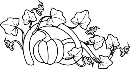 Coloring page. General view of pumpkin plant with ripe fruit and leaves isolated on white background