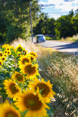 Weekend Road Trip to the Countryside / Blurred driving car at rural street near sunflower field