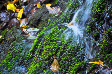 Very beautiful artificial waterfalls with living water and growing moss. Water flows from above