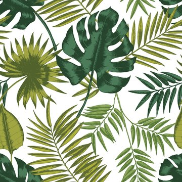 Elegant seamless pattern with leaves of tropical rainforest plants on white background