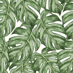 Monstera leaves hand drawn seamless color pattern