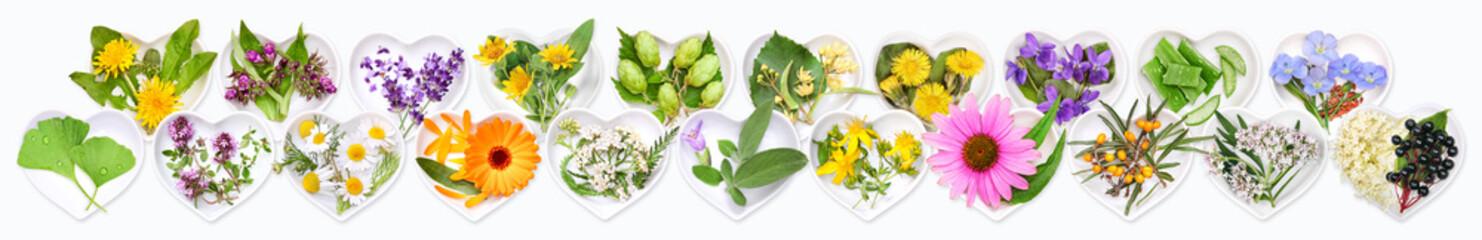 The most important medicinal plants