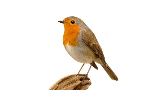 Beautiful small bird