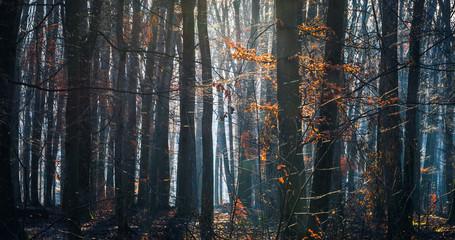 Orange leafs in foggy forrest