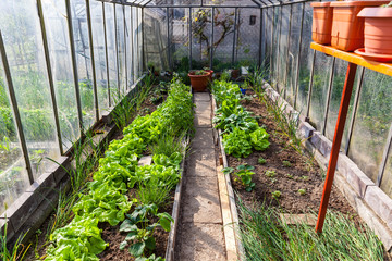 Inside of greenhouse with vegetables