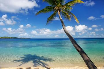 Sandy beach and leaning palm tree on Drawaqa Island, Yasawa Islands, Fiji