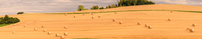 Fotoväggar - Landschaft im Sommer, abgeerntetes Getreidefeld, Panorama