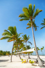 Resort on a white beach and tall palm trees. Beautiful white sandy beach of a luxury resort in Cap Cana, Dominican Republic
