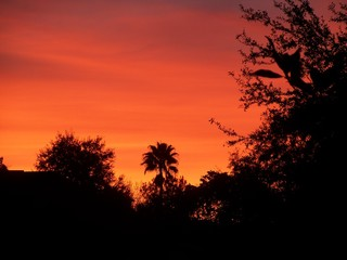 Red Winter Florida sunset