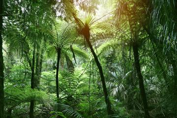 Canopy of jungle