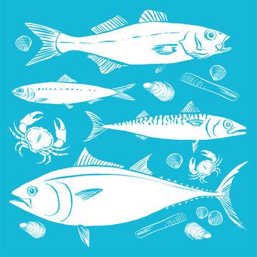 Fishing. Hand drawn sketch fish, sea bass, sardines, mackerel, tuna, mussels, clams and razor. Vector illustration. White on blue