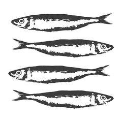 Hand Drawn Illustration a Group of sardines, Sardina pilchardus, Black on white