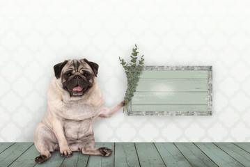cute smiling pug puppy dog sitting down on old green wooden floor, holding blank sign and eucalyptus twigs and branches, in front of wall with moroccan style print
