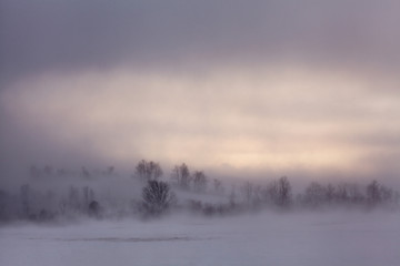 Tuinposter Lavendel Ground blizzard, 30-below wind chills in farm country of New York State, USA.