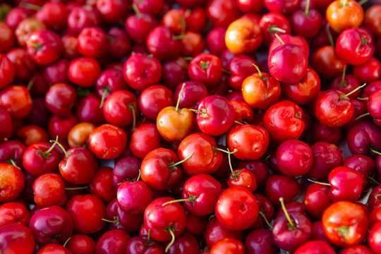 """Close up of fresh """"Acerola"""" cherry fruits. The acerola juice contains 40 to 80 times more vitamin """"C"""" than lemon or orange juice."""