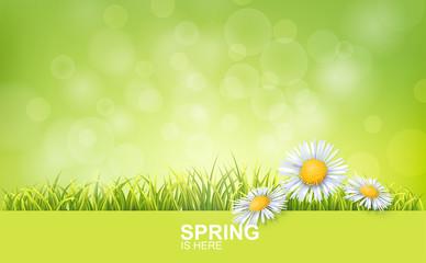 Spring Bright Background