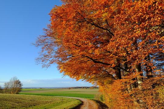 Baum, Weg und Wiese im Herbst, Andechs, Bayern
