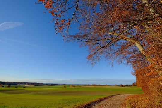 Baum, Weg und Feld im Herbst, Andechs, Bayern