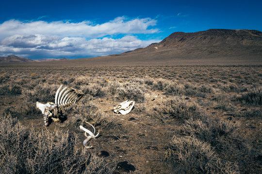 Skelton in the Desert
