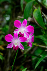 Image of beautiful violet orchid flowers in the garden.