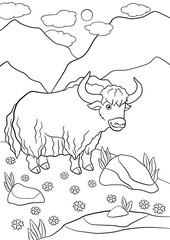 Coloring pages. Cute beautiful yak smiles.