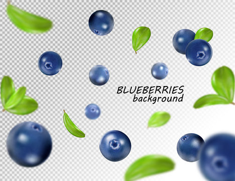 Falling blueberry isolated on transparent background. Quality realistic vector, 3d illustration